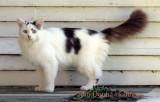 lianne's Kitty