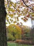 Fall Pastels at Mount Auburn Cemetery