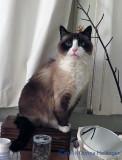 Lilicat on Martha's Dresser