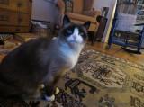 Lilicat in her Living Room