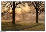 Kingsfold Dawn