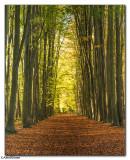 Clandon Forest