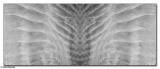 DSC_5028_Composite.jpg