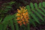 Red/Orange Flowers