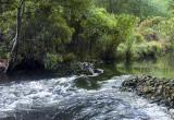 Connetquot River Stream