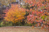 Autumn Meadow Croft
