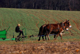 Amish boy working in the fields