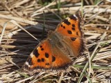 Årets fjärilar 2014 - Butterflies and Moths 2014