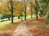 Autumn  is  just  around  the  corner.