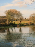 Late  autumn  at  the  old  fishing  pond.