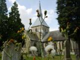 St. Helen's  behind  enormous  weeds.  LOL.