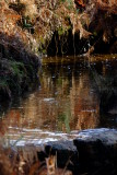 Moorland  reflections, above  a  waterfall.