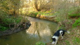 A  fast  collie  on  a  slow  bend.