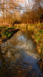 A  bright  February day, reflects  in  the  River  Rom.