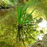 River  grass  reflected  in  shadows.