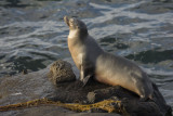 Seal 7575