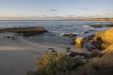 Seal Cove 7598