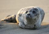 Seal 9432