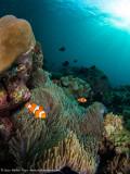 Reefscene - Misool