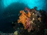 Kaleidoscope reef scene - Pele