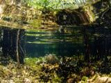 Mangrove garden