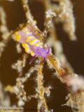 Nudi - Arborek Jetty (EM1)