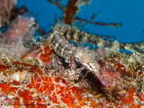 Pipefish - Arborek Jetty (EM1)
