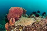 Woebegone & sponge - Dampier Strait (EM1)