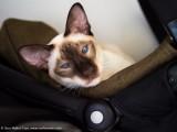 Leeloo chillin on the pram
