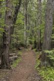 Johns Lake Loop Hike