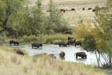 Bison Range Moise Montana