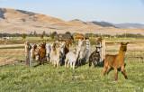 Rocky Mountain School of Photography - Farm Safari