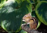 Animals & Reptiles