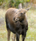 Yellowstone/Grand Teton National Parks