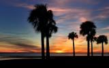 Wild Florida - 2013