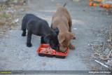 °¸¹Jªº¬üÄRÆF»î  The Beautiful Soul / Stray Dogs I Met