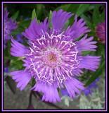 flowers_vividly