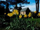 Village Springtime