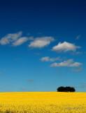 Cloud Signals