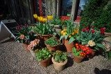 Pots of many colours