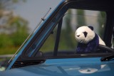 Panda in a Panda
