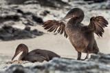 13-05 Galapagos 18.jpg