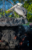 13-05 Galapagos 19.jpg