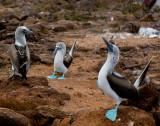 13-05 Galapagos 25.jpg
