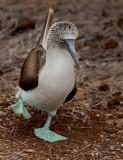 13-05 Galapagos 29.jpg