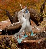 13-05 Galapagos 30.jpg