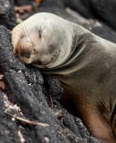 13-05 Galapagos 36.jpg