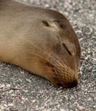 13-05 Galapagos 38.jpg