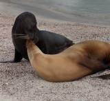 13-05 Galapagos 41.jpg
