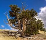 15-08 Spectra tree 3.jpg